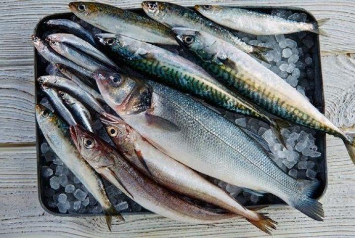 ¿Qué sabes del pescado azul?